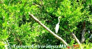 Veracruz, destino turístico con historia, cultura y bellos escenarios naturales: Sectur