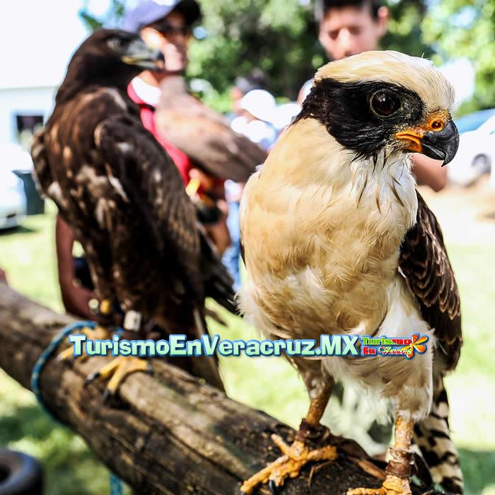 Veracruz, el corredor de aves migratorias más importante del mundo