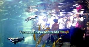 Éxito total el Pingüinario de Veracruz que recibe a miles de turistas
