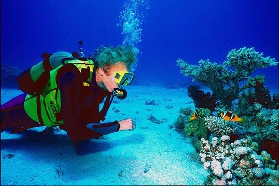 Arrecifes Del Norte de Veracruz