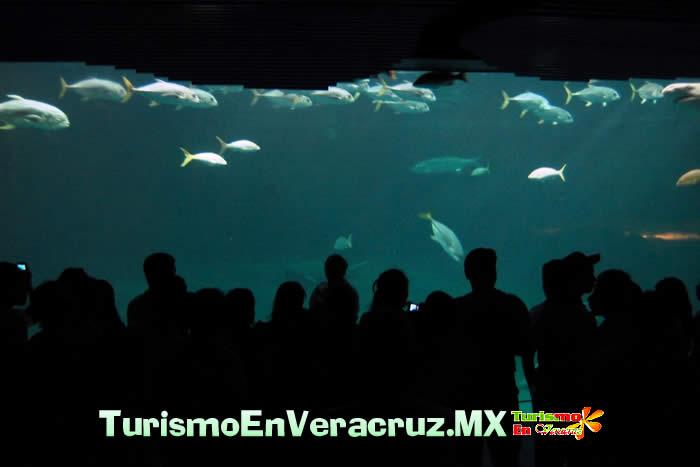 Espera Acuario de Veracruz más de 11 mil visitantes