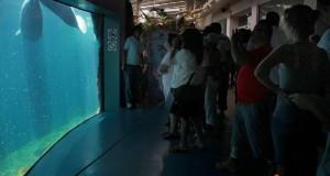 Espera más de 100 mil visitantes el Acuario de Veracruz