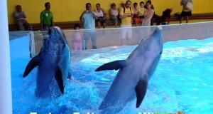 Acuario de Veracruz, entre los 10 mejores del mundo