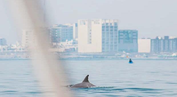 Aparecen delfines en las costas de Veracruz