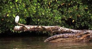 De Tecolutla a Playa Hicacos, Veracruz